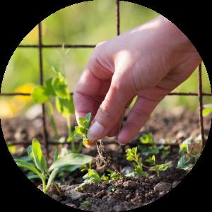 engagedhr-weeds-round