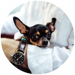 Used - Blog - June 2 - Dog - Circle